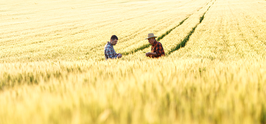 Two men in a field of wheat