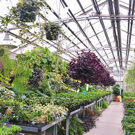 SCC Greenhouse