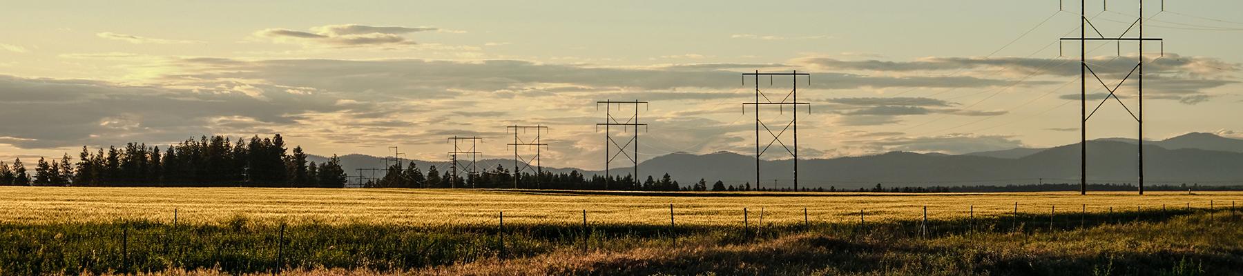 Colville cornfields with telephone poles/lines at sunset