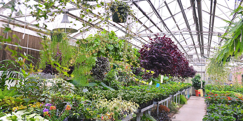 Greenhouse plants in SCC greenery