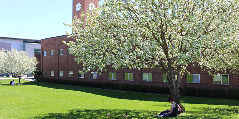 Student studying under a blossoming tree in the spring